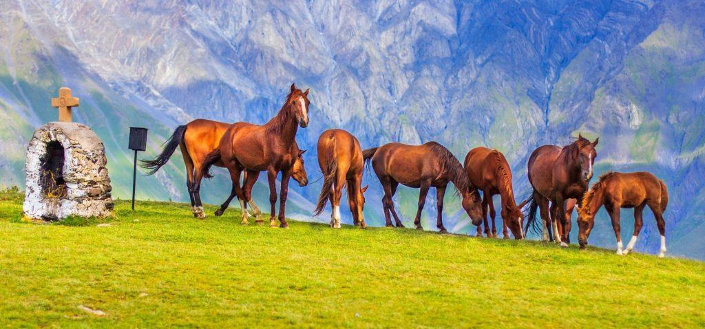 Konie na stokach Kaukazu