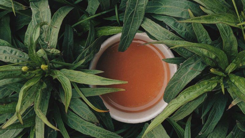 Herbata. Zapraszamy w podróż po herbacianym królestwie!