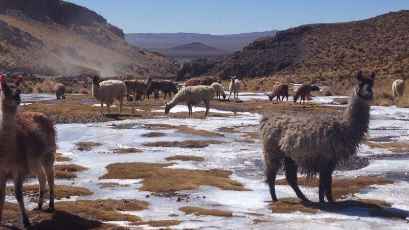 Surowa Boliwia. Dziewicze krajobrazy i rajd Dakar