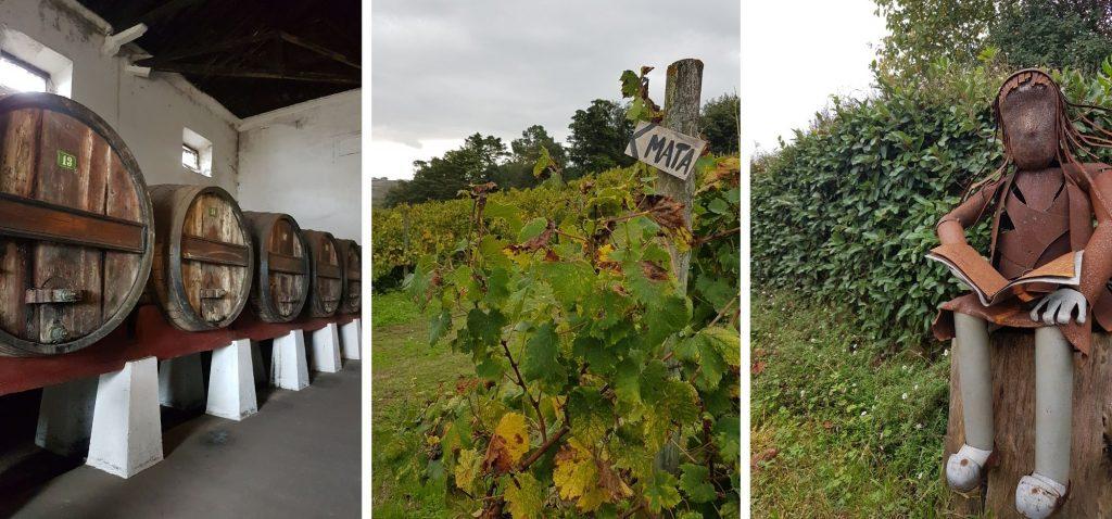 Winnice w Bombarral