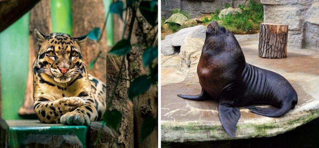 Zoo w Wiedniu i w Pradze - najlepsze atrakcje dla dzieci i rodziców