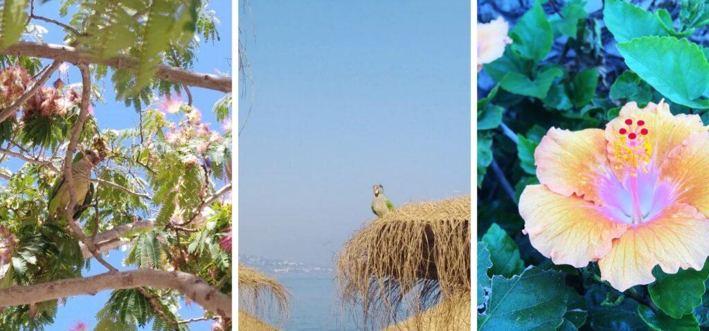 Fauna i flora Malagi