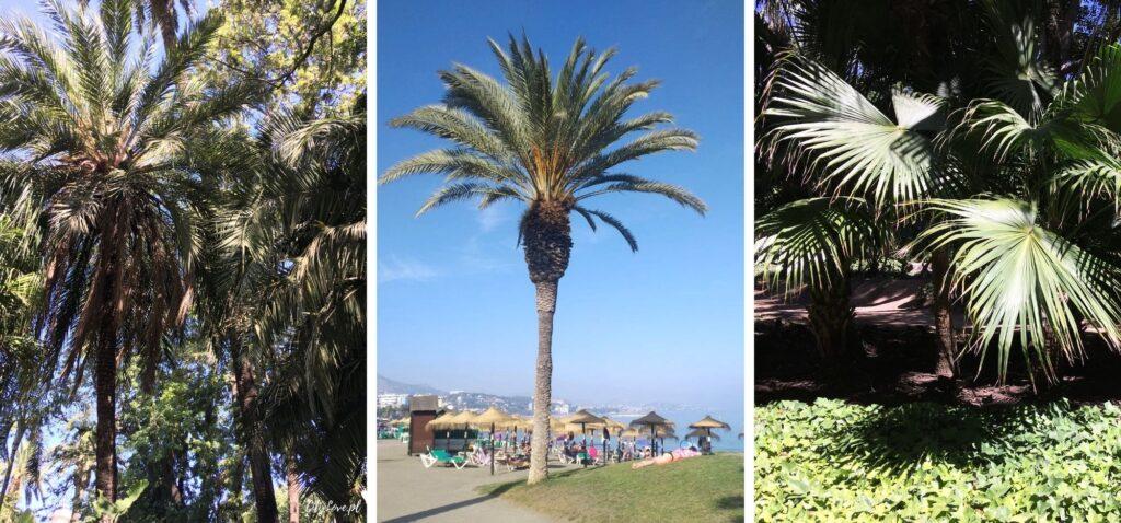 Roślinność Malagi