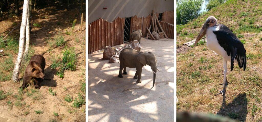Nowe Zoo to ulubione miejsce wszystkich dzieciaków