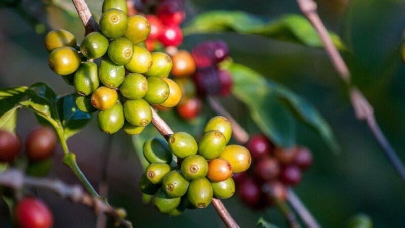 Kawowym szlakiem dookoła świata